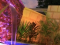 281039433_nic_spa_waterfeature